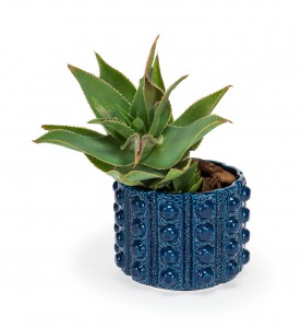 Ceramic Factory Aldus Potplant Holder R499